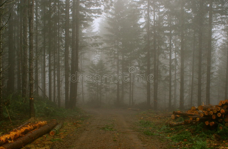 Logging in forestry. Piles of logs in misty forestry royalty free stock image