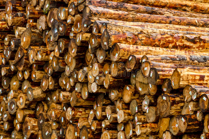 Logging Industry Log Yard. Close up of large pile of harvested and cut tree trunks in log yard ready for transport to mill stock photo