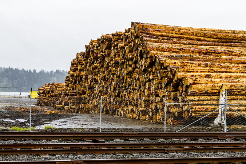Logging Industry Log Yard. Large pile of harvested and cut tree trunks in log yard ready for transport to mill royalty free stock image