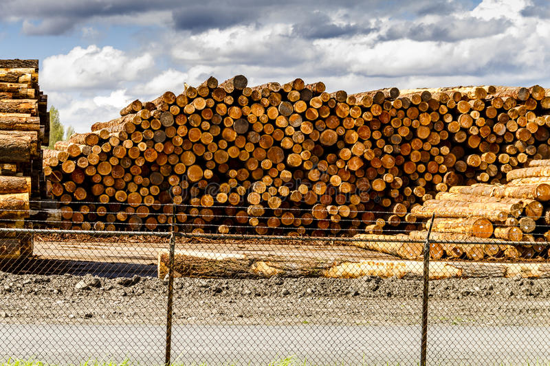Logging Industry Log Yard. RAINIER WASHINGTON/U.S.A. - April 6, 2015: Large piles of harvested and cut tree trunks in log yard ready for transport to mill on stock photo
