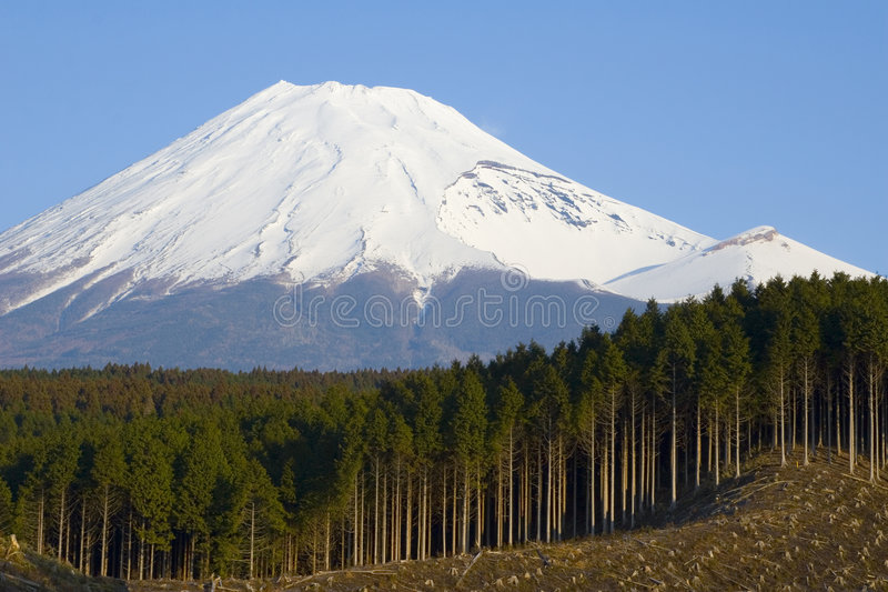 Logging in Japan. Clearcut logging of a cedar forest near Mt. Fuji, Japan stock photos