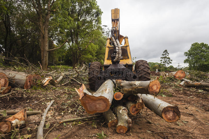Logging Machine Front. Tree Logging lifting machine removing wood logs cut and in the hydraulic jaws about to be lifted into a truck. Wide angle photo in front stock photography