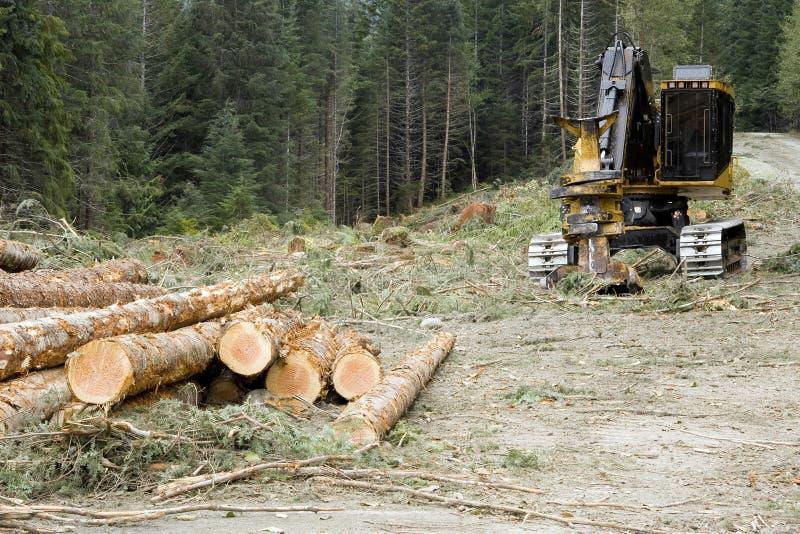 Logging Operation stock photography