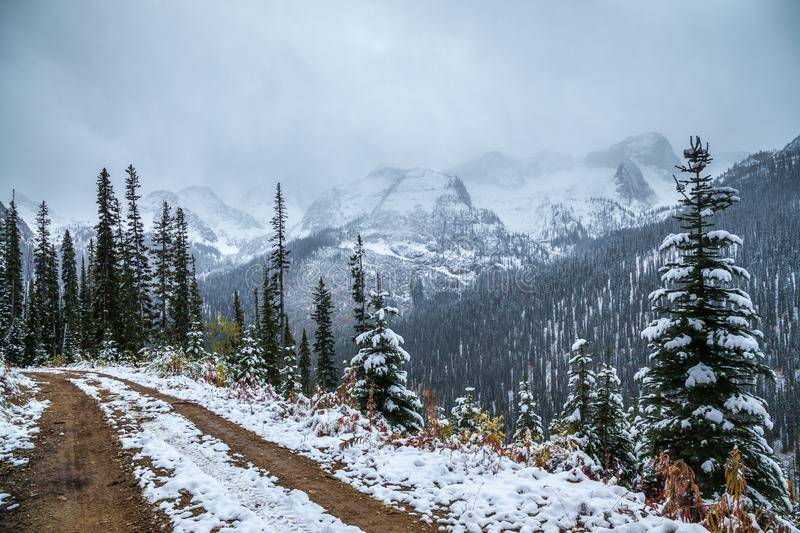 A logging road in the Canadian Rocky Mountains of British Columbia stock images