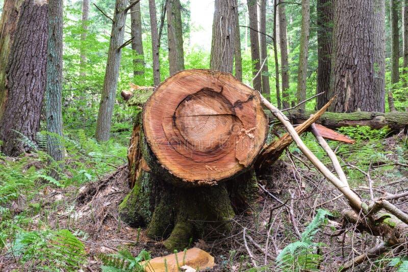 Logging Site royalty free stock photos