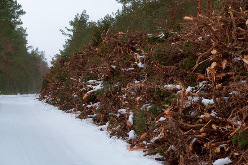Logging in winter, sawn trees under snow. Sawn trees under snow, logging in winter stock image