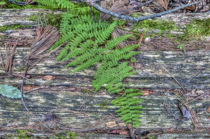 Login bos in de zomer stock afbeeldingen