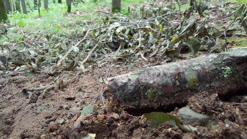 Login hout stock afbeeldingen
