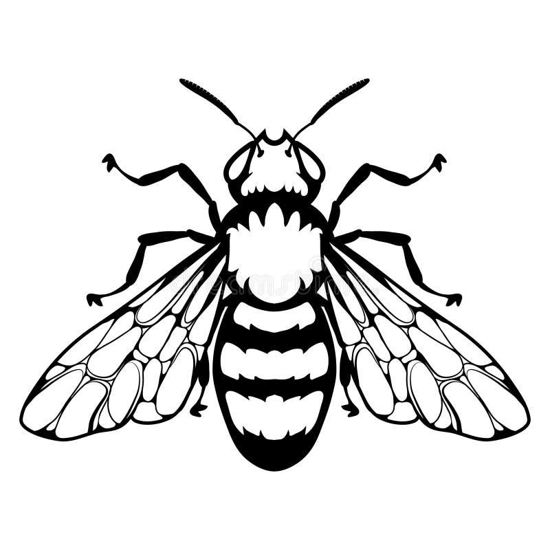 Logo Dabeille Abeille De Miel Sur Le Fond Blanc Croquis