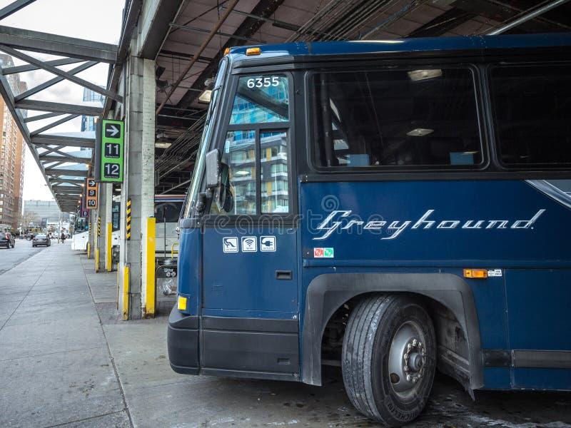Logo del levriero su un bus del motorcoach parcheggiato sulla stazione di vettura di Toronto Il levriero Canada è uno dei traspor immagini stock