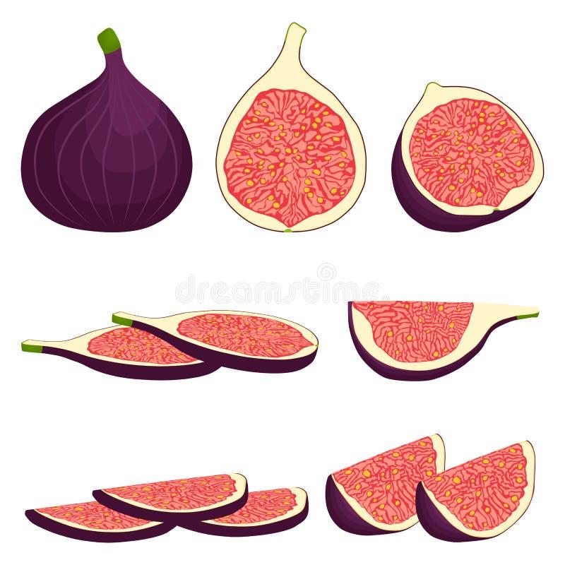 Logo för vektorsymbolsillustration för hel mogen fruktlilafikonträd vektor illustrationer