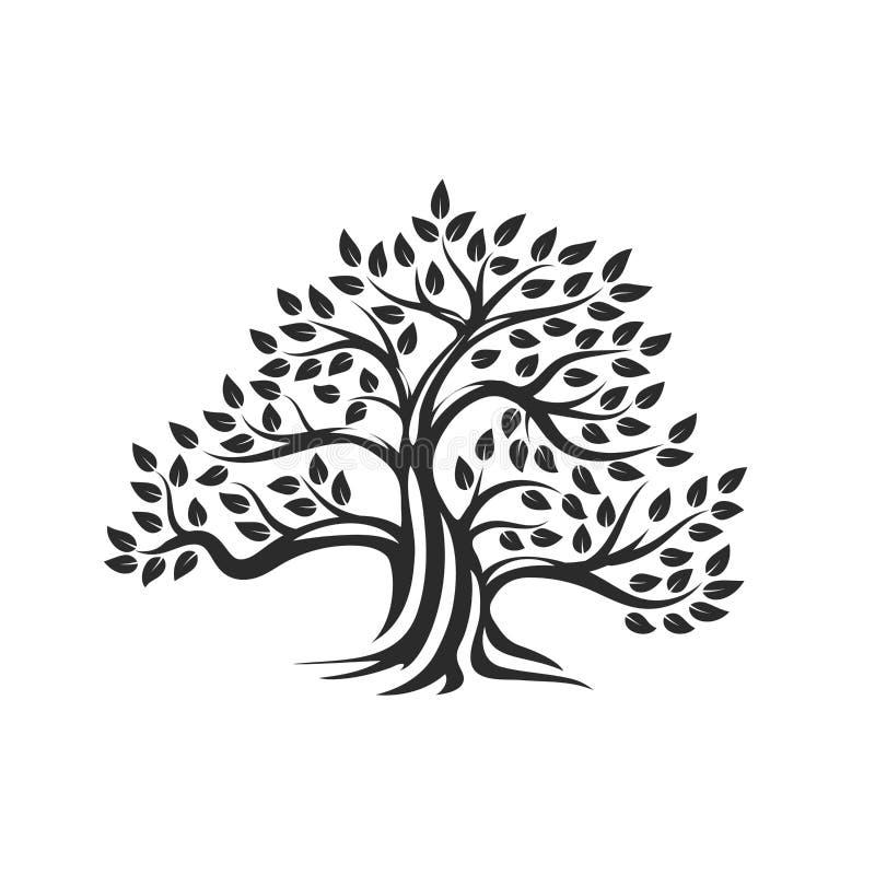 Logo naturel et sain organique de silhouette d'olivier d'isolement sur le fond blanc illustration de vecteur