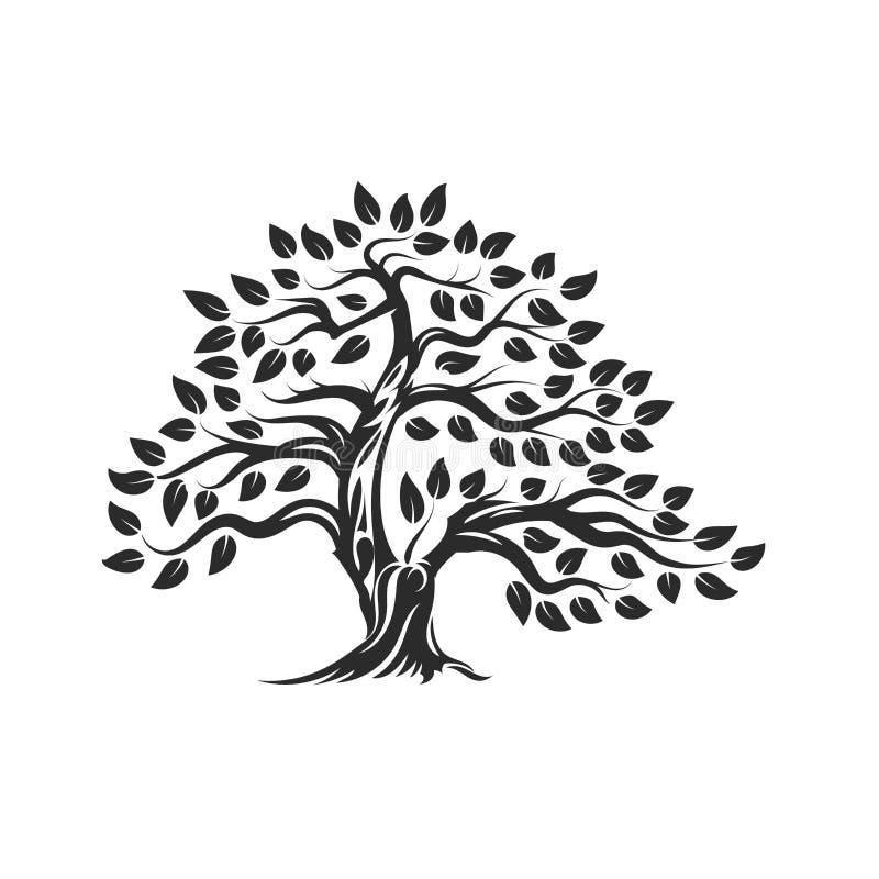 Logo naturel et sain organique de silhouette d'olivier d'isolement sur le fond blanc illustration stock