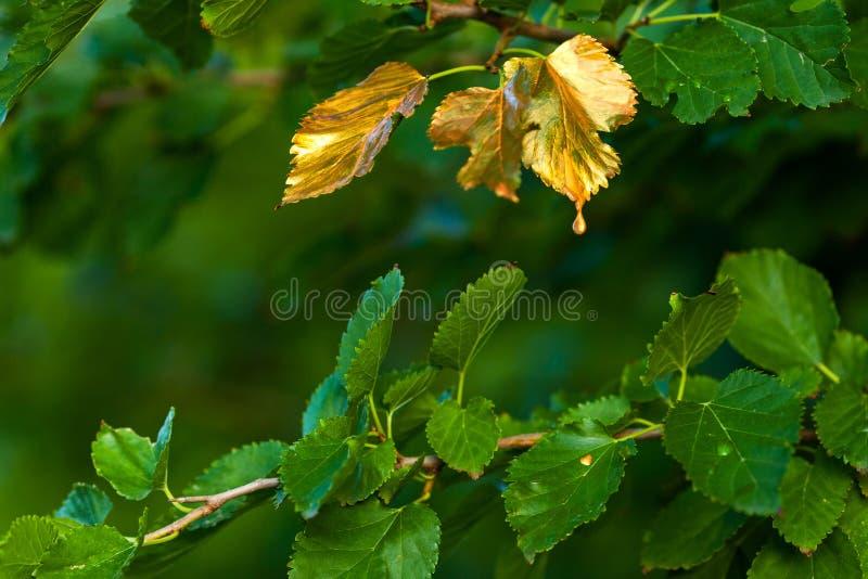 Logo outono, as folhas gerenciem dourado fotografia de stock