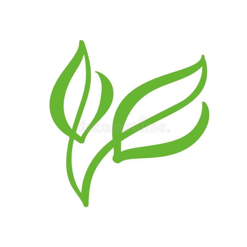 Logo zielony liść herbata Ekologii natury elementu ikony wektorowy ogród Eco weganinu kaligrafii życiorys ręka rysująca ilustracj royalty ilustracja