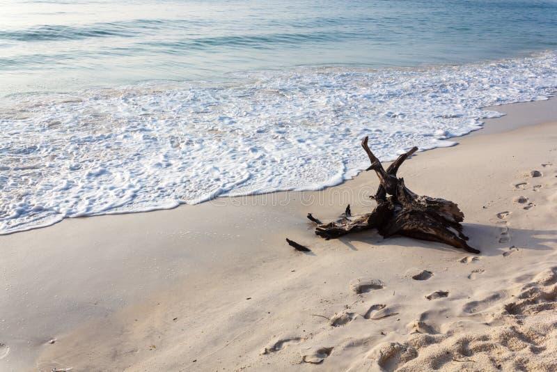 Logon красивый пляж стоковые изображения