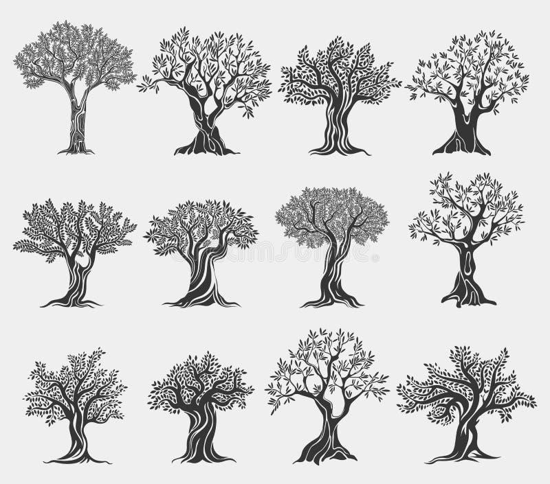 Logotipo aislado, iconos de los árboles del aceite de oliva de la agricultura stock de ilustración