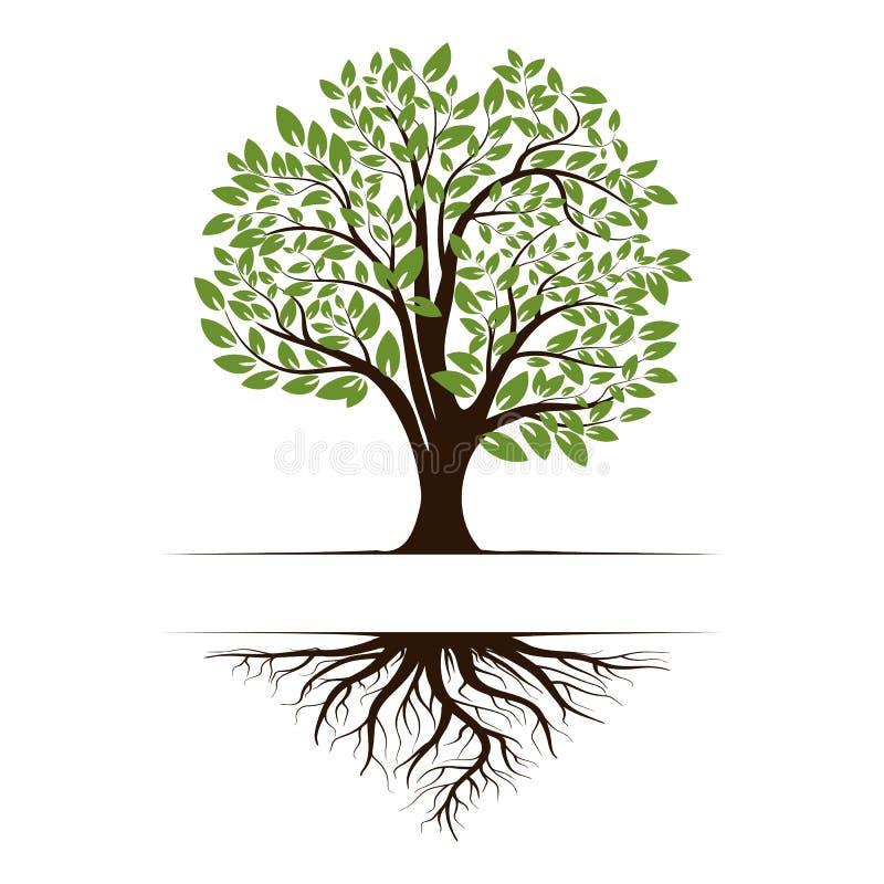 Logotipo de uma árvore verde da vida com raizes e folhas Ícone da ilustração do vetor isolado no fundo branco ilustração do vetor