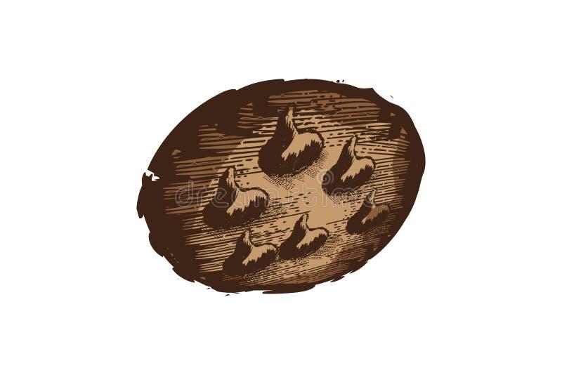 logotipo dibujado mano de las galletas ilustración del vector