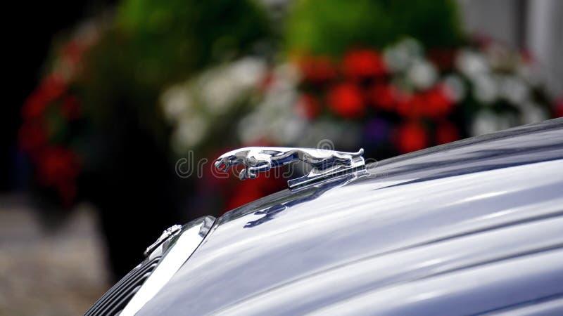 Logotipo do jaguar imagem de stock