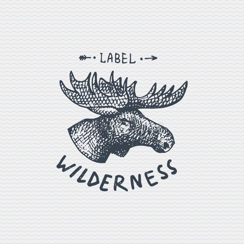 Logotipo do vintage ou crachá velho, alces selvagens tirados do estilo da mão gravada e velha da etiqueta, cara dos alces ilustração royalty free