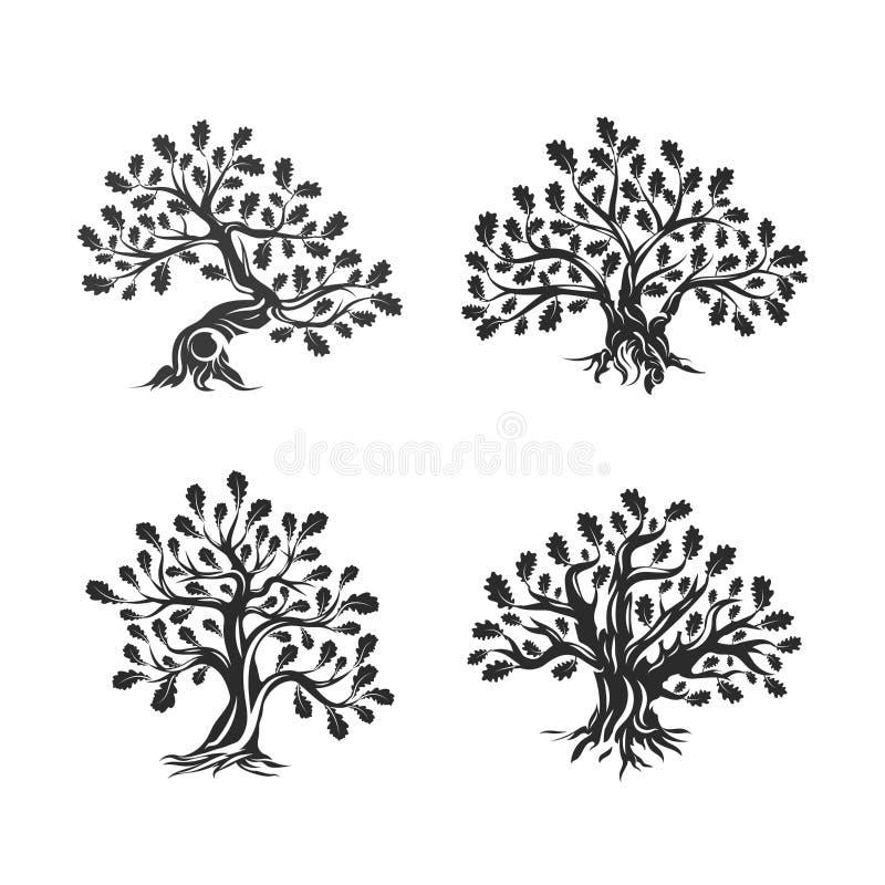 Logotipo enorme e sagrado da silhueta do carvalho isolado no fundo branco ilustração stock