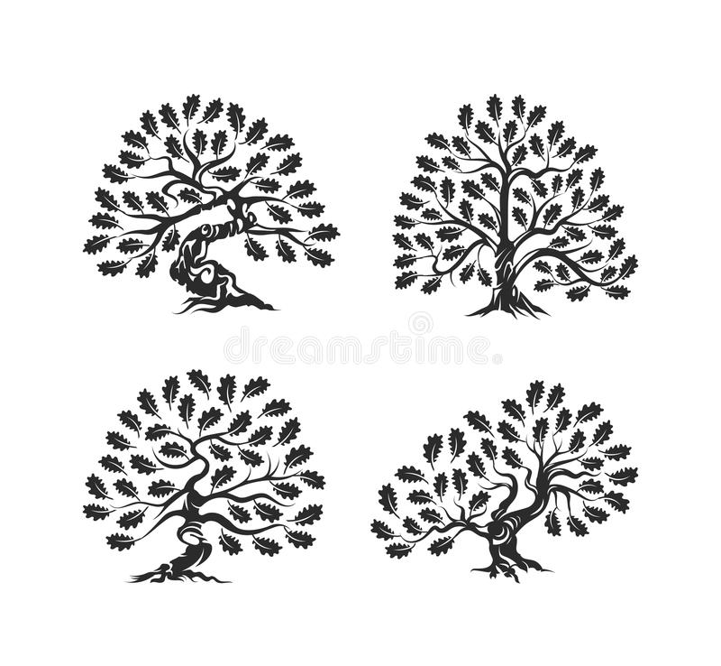 Logotipo enorme e sagrado da silhueta do carvalho isolado no fundo branco ilustração royalty free