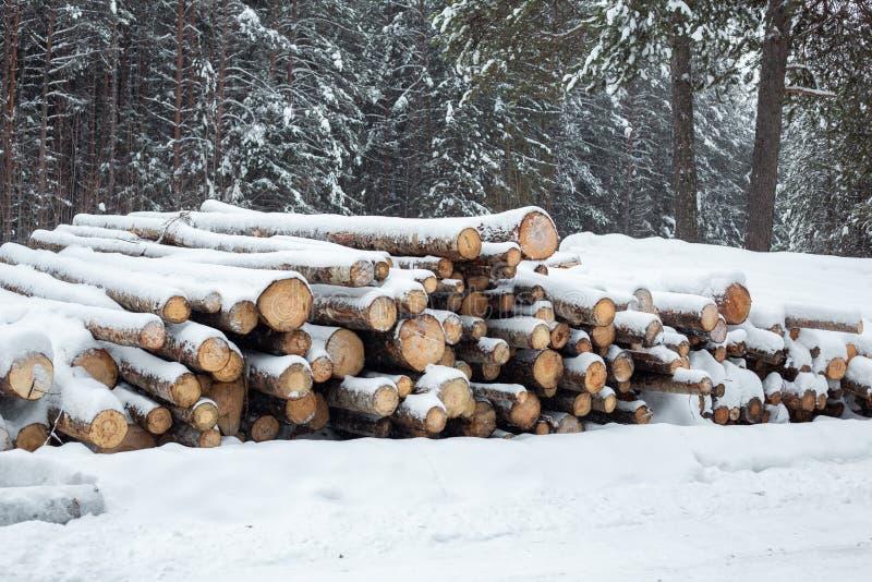 Logować się śnieżnego lasu zapas szalunek miasto blisko kolejowych drogowych połysk snow słońce zima drewno fotografia royalty free