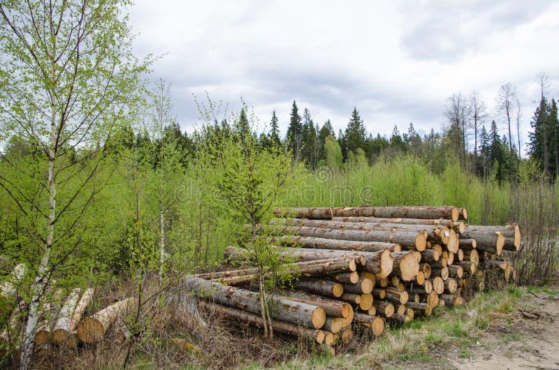 Download Logpile на весне стоковое изображение. изображение насчитывающей пуща - 40585603