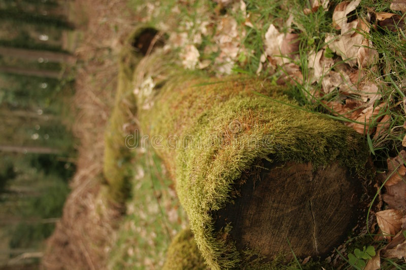 Download Logs stock image. Image of windy, autumn, logs, cold, forest - 123743