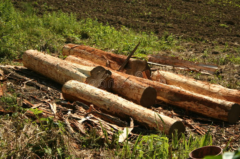 Download Logs stock image. Image of deforestation, more, textured - 14807059