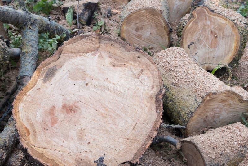 Logs, bois de chauffage sur fond de sciure de bois photos stock