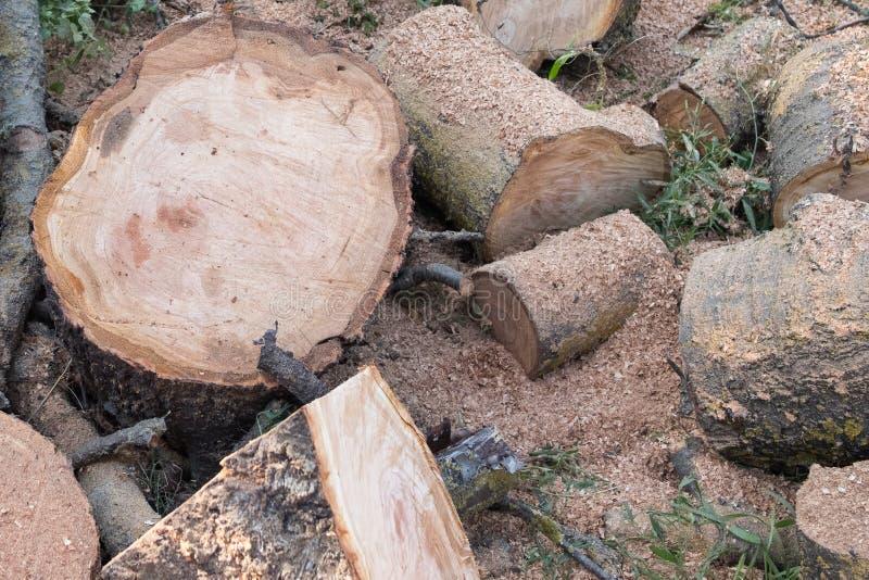 Logs, bois de chauffage sur fond de sciure de bois photographie stock libre de droits