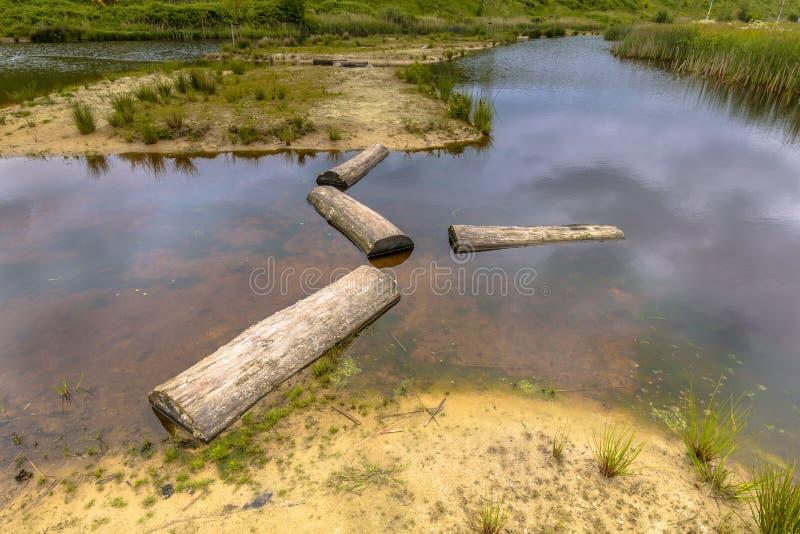 Logs como alpondras na lagoa fotografia de stock