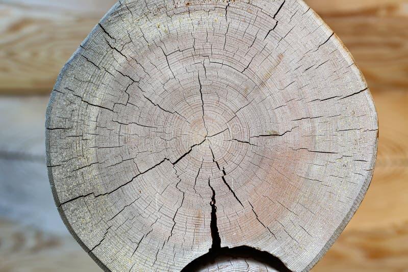 Logs cortados com anéis anuais e quebras foto de stock