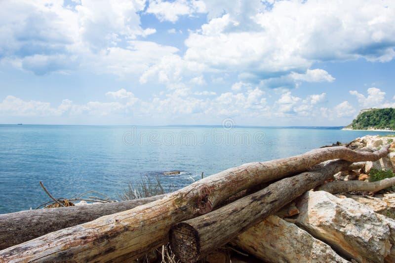 Logs das árvores no mar foto de stock royalty free