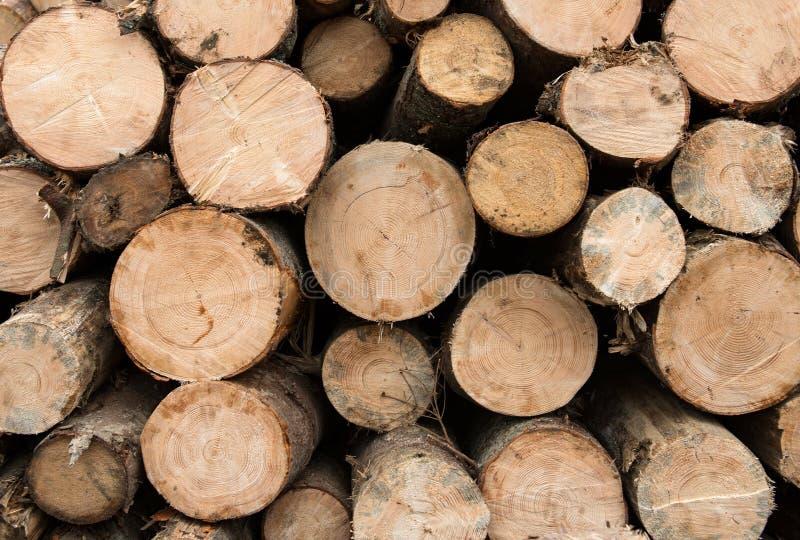 Logs de madeira fotografia de stock royalty free