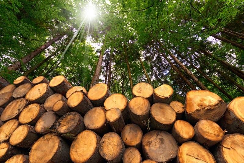 Logs de madeira com a floresta no fundo foto de stock