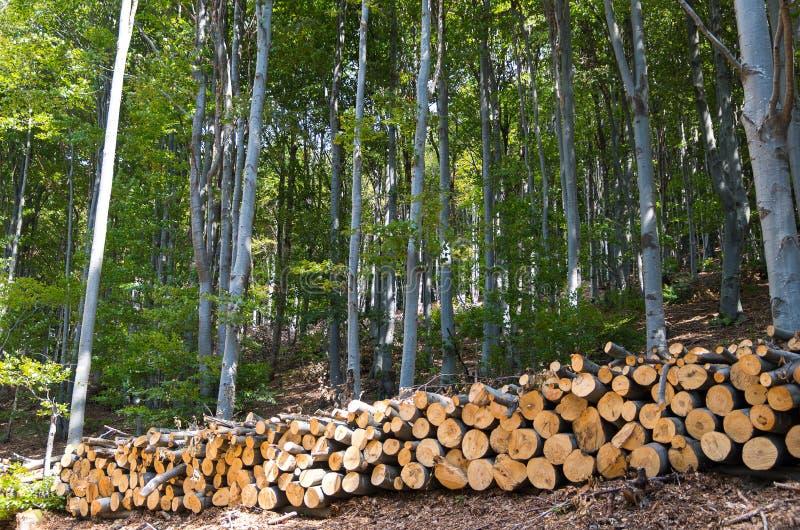 Logs de madeira com a floresta no fundo Floresta da faia foto de stock
