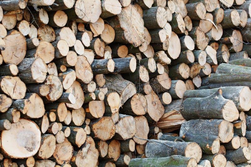 Logs de madeira com a floresta no fundo Troncos das árvores cortadas e empilhadas no primeiro plano fotografia de stock royalty free