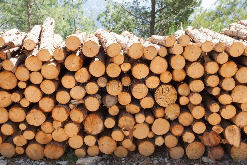 Logs de madeira com a floresta no fundo/troncos das árvores cortadas e empilhadas no primeiro plano, floresta verde no fundo com  fotos de stock