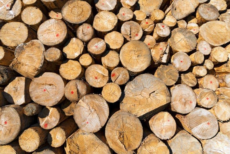 Logs de madeira do pinho empilhados imagens de stock royalty free