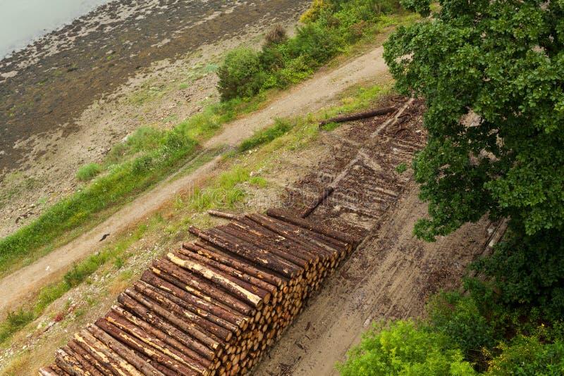Logs de madeira de madeiras de pinho na floresta, empilhados em uma pilha Logs recentemente desbastados da árvore empilhados acim imagens de stock royalty free