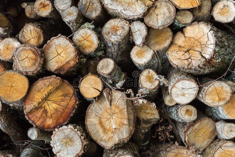 Logs de madeira vistos empilhados foto de stock