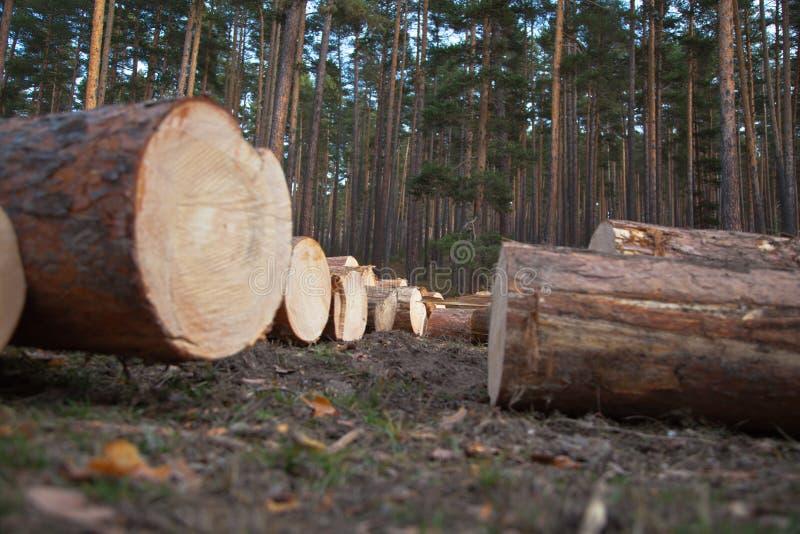 Logs de pin photos libres de droits