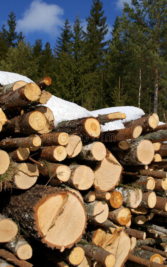 Logs in Forest royalty free stock image