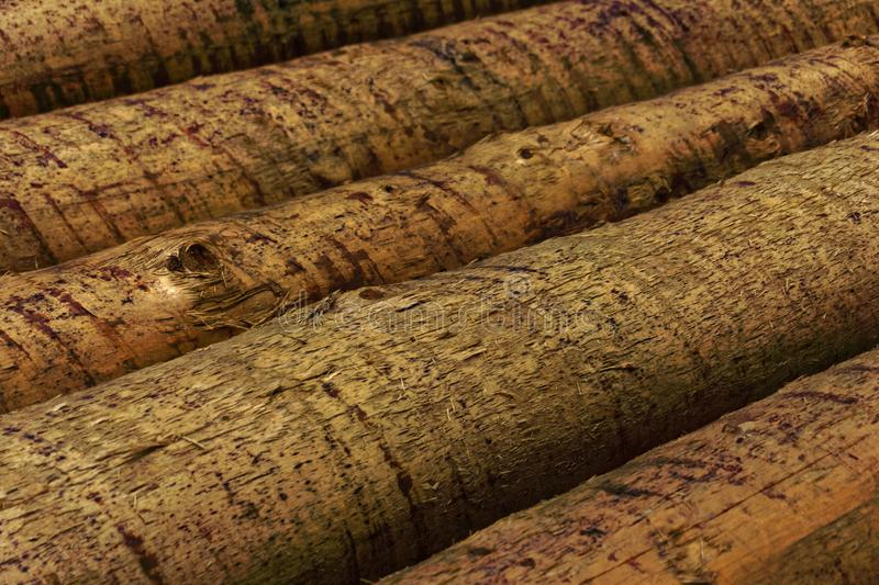 Logs in the forest. Close up royalty free stock photo