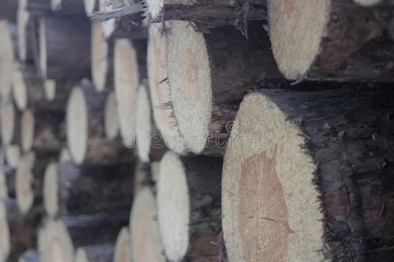 Logs in the forest royalty free stock photography