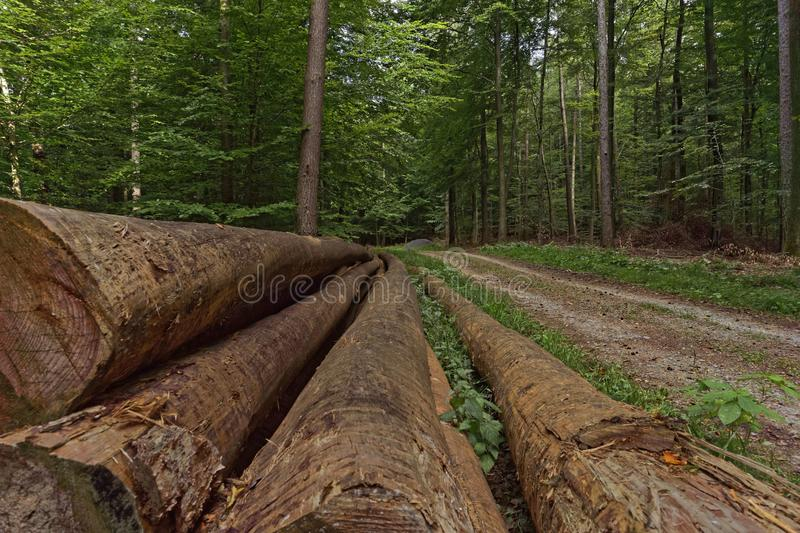 Logs in the forest. Close up stock photos