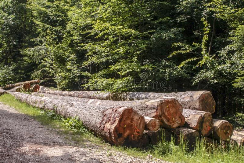 Logs in the forest near the fir road, route des sapins. Logs in the forest near the fir road, route des sapins in France royalty free stock photos